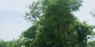 कुणाल-विलास-वेडेपाटील-या-Kunal-Vilas-Vedepatil-ya
